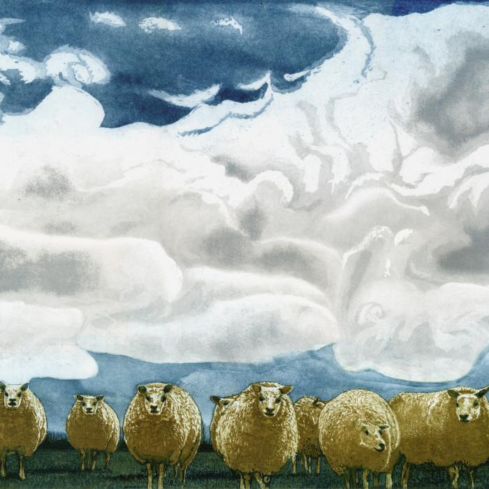 353 Schafe - 240,- €